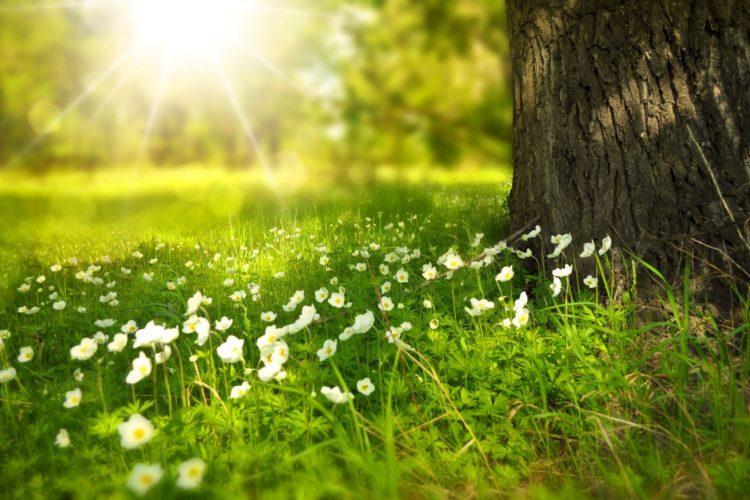 metsässä valkoisia kukkia.