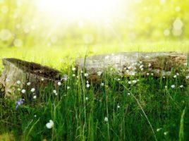 puunkanto, niittyä ja aurinko.