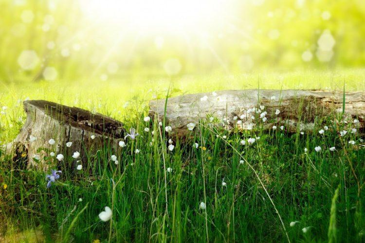 puunkanto, niittyä ja aurinko