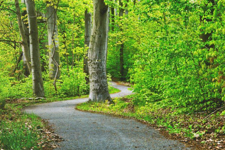 polku metsässä.