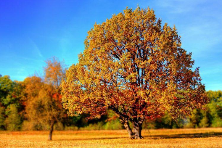 Puu syysväreissä.