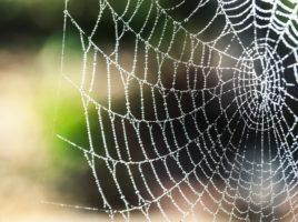 Hämähäkinverkko.