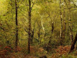 Syksyinen metsä keltaisissa ruskan väreissä.