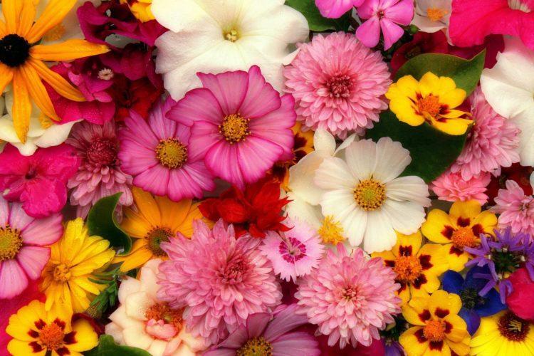 Värikkäitä kukkia isossa kimpussa.