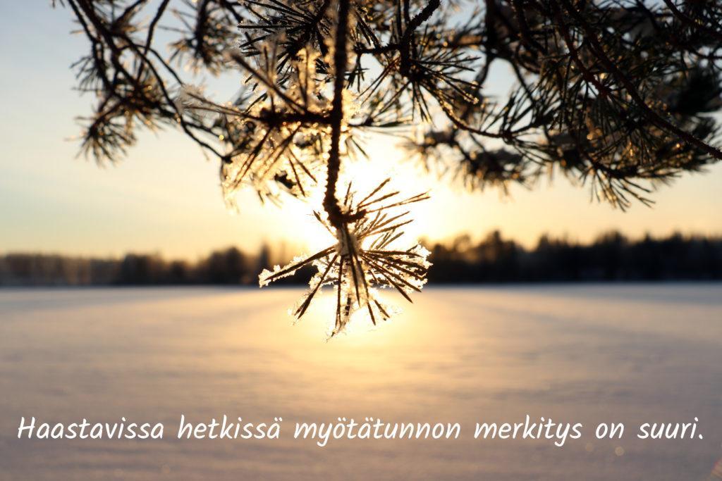 Jäätynyt männynoksa peittää laskevan auringon.